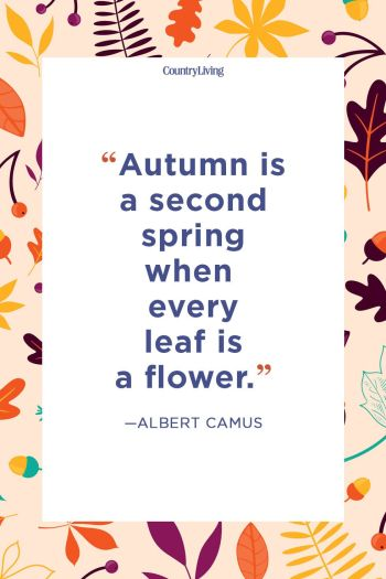 fall-quote-albert camus second spring